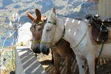 Греция. Санторини о. Тирасия. Ослики возят туристов с берега моря  по тропе-серпантину в посёлок на высоту 300 метров.