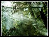 Подмосковный лес, дым от мусорного костра :)