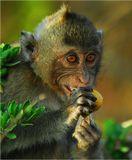 Остров обезьян. Сиамский залив. Таиланд.