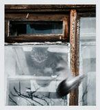 или  о том, что такое не везёт и как с этим бороться))__в продолжение историй с питерскими окнами,за которыми живут Коты:)