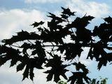 Если листья сильно напугать, они становятся птицами.