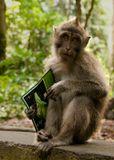 Из жизни макак-крабоедов, так похожих на нас :)Индонезия. Бали