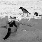 кот охота птицы