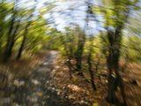 ...хочется относится к фотоаппарату не как к верному помощнику, а как к единственному другу, с которым стремишься поделиться своим восторгом, упоением природой,  завораживающей жизнью вокруг. Кажется, что фотоаппарат способен чувствовать, и тогда я его увлекаю за собой в полу-мысленную пробежку по аллее или медленно кружась, опускаюсь с ним желтыми листьями на землю, а в следующий миг ударяюсь брасом по этой желто-зеленой массе... выдержка 1/25