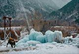 По дороге на Приэльбрусье из странной зеленоватой глыбы льда бьет вверх струя воды под которой в полном блаженстве купаются местные коровы :)Видимо это сооружение над какой-то старой шахтой из которой течет  теплая минералка :)