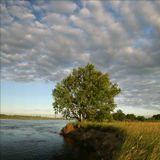 в следующее половодье этот дуб поглотит река. реки движутся ....