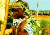 """Захотелось вспомнить о былой службе без пафоса. Вот - """"нарыл"""" их эфиопского архива. Это 23 февраля 1989 года - я в годичной спецкомандировке в Эфиопии. Джуди - наш авиаотрядовский талисман.   Всех с праздником, всем всего, всегда и везде!!!  А за качество фото просю пардону - скан с очень старого слайда (помните ГДР-ровскую слайдову плёнку ORWO? Это она...)"""