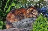 """С днем кошки!Сегодня, 1 марта, в первый день первого весеннего месяца, по стихийно сложившейся традиции в России отмечается День кошек, - сообщает """"Календарь праздников"""" (с)"""