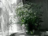 лето,цветы
