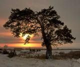 Закат, одинокая сосна, зима...