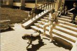 NIKON D50 18-55\ 3.5-5.6    Как шла собака погулять,и как хозяйка за ней НИ  поспевала....Случайное фото, случайно держал включенный,хобака стащила хозяйку со ступенек,в буквальном смысле слова,может кошку увидела?! Приятного просмотра !!!