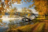 Утро, золотая осень, Люботин, Харьков, пруд, дорога, берег