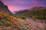 Россия, Республика Алтай. Великолепный осенний ковер, сотканный из тысяч заиневевших цветов, раскинулся на сотни метров вокруг стоянки Пионерская на берегу реки Куйгук.