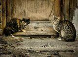 ......грустно они на прохожих смотрели.весна,двор,животные,кошки,взгляд,природа