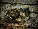 весна,природа, животные,кошки
