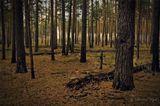 Тверская область.Осень