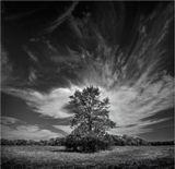дерево   небо   облака   осень