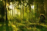 присутствие лешаго