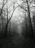 Есть в этой хмурой непогодеКакой-то рок,печаль земли.Лениво щиплет дождик лужу,Листок пожухлый шевелит.В туманный саван запахнувшись,Стоят немые дереваУныло под ноги взираяНа облетевшие слова.