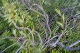 ...хочется относится к фотоаппарату не как к верному помощнику, а как к единственному другу, с которым стремишься поделиться своим восторгом, упоением природой, завораживающей жизнью вокруг. Кажется, что фотоаппарат способен чувствовать, и тогда я его увлекаю за собой в полу-мысленную пробежку по аллее или медленно кружась, опускаюсь с ним желтыми листьями на землю, а в следующий миг ударяюсь брасом по этой желто-зеленой массе... 1/50 с, F/8