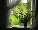 весна,черёмуха,окно