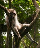 Балдеет макака. И мне тепла хочется :)Индонезия. Бали