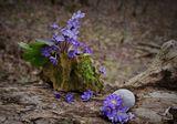 Где-то там,далеко - не бывает зимы,Не бывает весны, круглый год там жара,А у нас по весне тают зимние льды,Пробуждается жизнь от холодного сна...(с)
