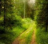 утро природа пейзаж лес дорога