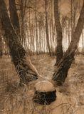 Бывая в лесу, я довольно часто наблюдал сюжеты из леснойжизни очень напоминающие наши человеческие отношения...Выставляю некоторые работы на ваш суд. :)