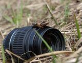 Не оставляйте свои вещи без присмотра, что бы потом не пришлось на лягушке жениться! И не факт что лягушка превратится в принцессу или в прЫнца!
