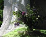 полевые цветы,деревня