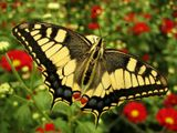 Такая вот бабочка