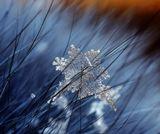 макро снежинка