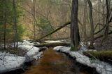 Через буреломы  к весне стремится ручей неся за собой талые воды.