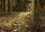 Все пройдет, но ты жди, вновь наступит весна,И вернется тот свет, что искали глаза!...(с)Много лет не видела сон-траву.Честно говоря, я даже не думала, что она растет где-нибудь еще в наших лесах.Немного опоздала..,но будет следующий апрель...и снова расцветёт это маленькое чудо весны!
