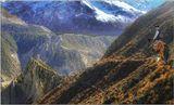 В горах Непала.