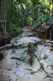 Fraser Island, Wangoolba creek, Australia