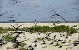 Bird Island.Сейшельские острова.