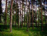 Пейзаж, природа.