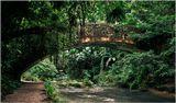 низовья водопадов Кавасан, о.Бохол, Филиппины заброшенный мост в джунглях   филиппины кавасан мост джунгли