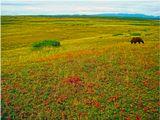 Вообще-то мы пытались сфотографировать мишку и тогда бы фото попало в серию про косолапых: http://www.lensart.ru/album-uid-1879-aid-4ca3-sh-1.htm . Но медведь упорно не хотел позировать и все время держался от нас на расстоянии. Так-что получилось фото про морошку.