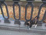 кошка, канал Грибоедова