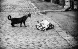 """* а Воздушный Шарик думал: """"Ко мне подкралась кошка скрытно.  Ужасно кошке любопытно,  Какой скрываю я секрет"""" * или гимнастика  :)"""