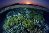 Ночной риф очень красивое зрелище! Красное море, недалеко от поселка Марса-Алам. Nikon f80. Пленка слайд Fuji-provia