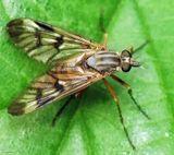 макро природа муха