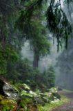 Карпаты, Черногорский хребет. Июнь 2006.