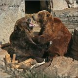 Денверский зоопарк