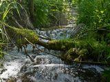 Устье реки Чермосала.