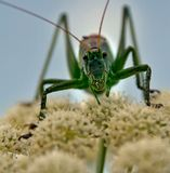 В траве сидел ...макро,насекомые,природа,лето