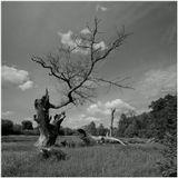 лето,деревья,годы